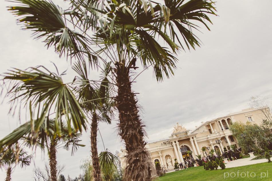 egzotyczne palmy na placu przed salą Venecia Palace