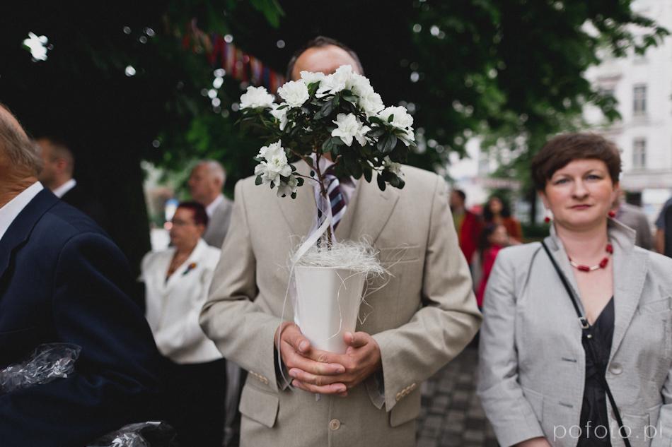 gość weselny z kwiatkiem doniczkowym chowa się przed obiektywem za roślinką